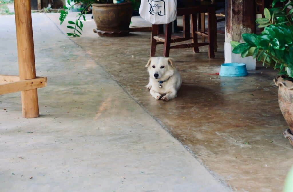 A dog sitting on the floor of the cooking school