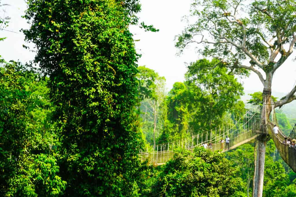 Kakum National park canopy walks